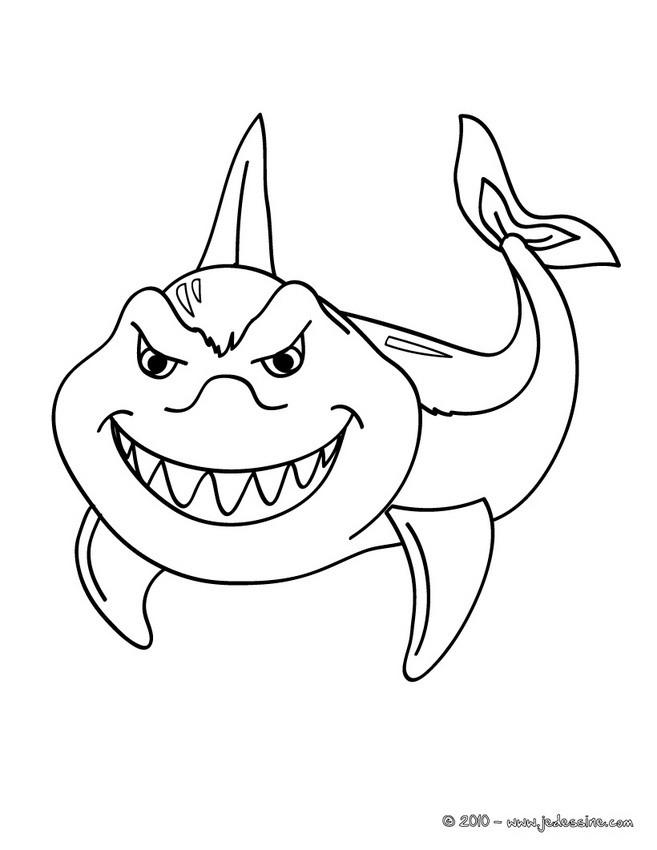 dessin de requin - Les dessins et coloriage
