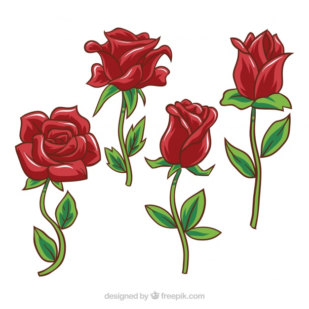 dessin de rose rouge