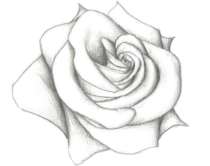 Dessin De Rose Les Dessins Et Coloriage