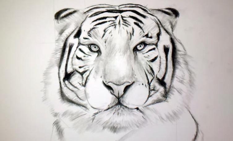 Dessin De Tigre Les Dessins Et Coloriage