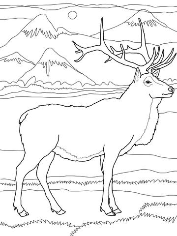 dessin de wapiti