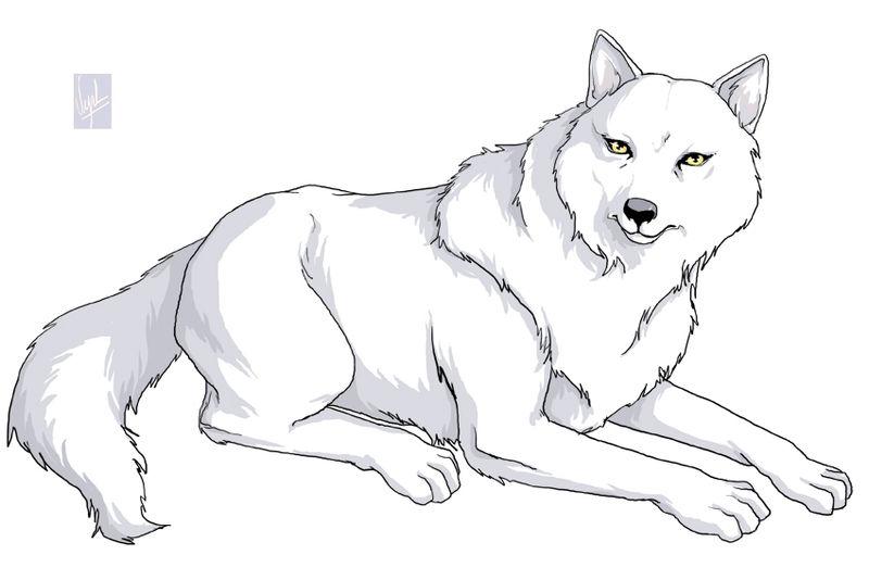 Dessin Manga De Loup Les Dessins Et Coloriage