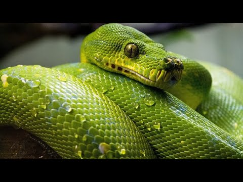 dessin pixel serpent